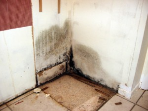 water_damge__causes_mold